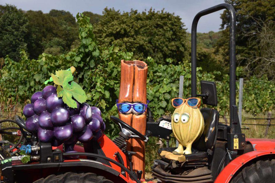 Traktorfahrt zu den Weintrauben